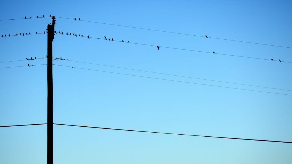 birds-1030919_1280